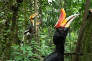 nära upp hornbill i thailändska djurparker