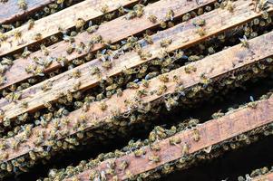 honungskaka av människan gjord på trä foto