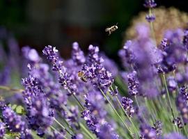 bin på blomman i trädgården foto