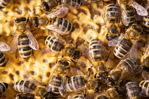 makroskott av bin som svärmer på en honungskaka foto
