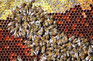 bin på honungskaka foto