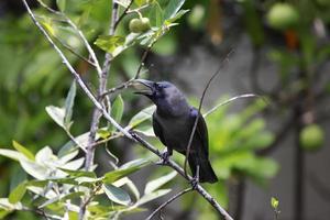 svart fågel på träd foto