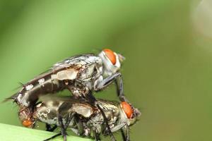bug och litet insekt foto