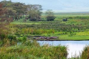 afrikanskt landskap foto