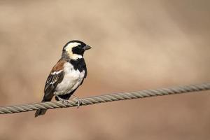 fågel på tråden foto