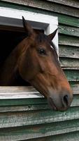 vacker häst porträtt foto