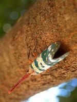 insekt i naturen