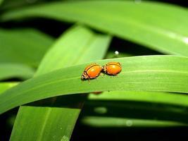insekt i naturen foto