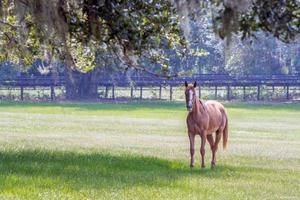 solohäst i en sydlig betesmark foto