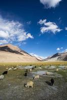 flock får på bakgrund av avlägsna färgglada mountai foto