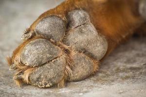 hund fötter och ben foto