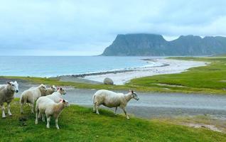 havsutsikt över hauklandstrand (norge, lofoten). foto