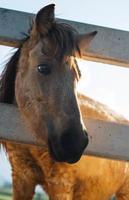 hästar i sin stall foto