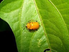 insekt insekt