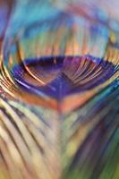 abstrakt påfågelfjäder, oskarp livlig färg foto