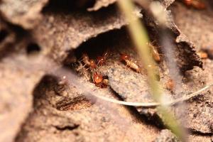 termiter foto