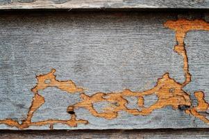 termitspår på träväggen. foto