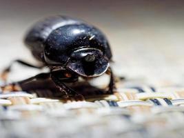 närbild av en svart skalbagge foto