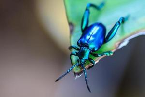 insekt på grönt blad foto