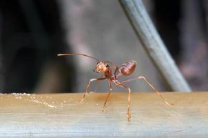 myra makro på nära håll foto