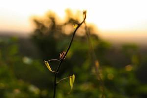 myra på en gren i djungeln peten guatemala foto