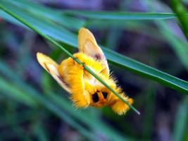 insekt bug foto