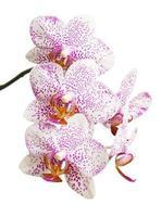 blommor orkidéer foto