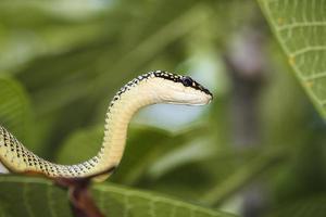 grön orm foto