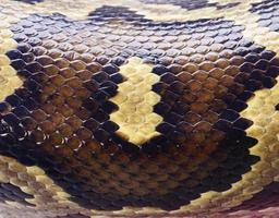 python bakgrund, orm foto