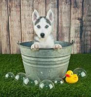 badtid! foto