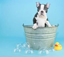 badtid foto