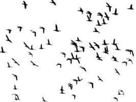 flock av fåglar foto