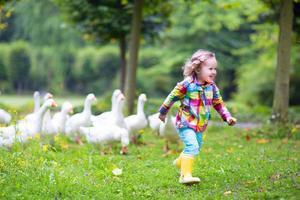 liten flicka som leker med gäss foto