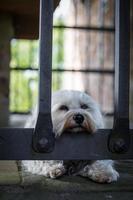 fängslad och ledsen foto