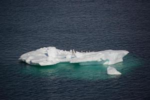 isberg i antarktis foto