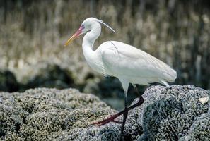 häger söker efter fiskar nära våtmarkens bredd. foto