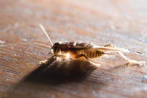 cricket foto