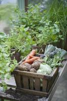 trä låda med grönsaker i växthus foto