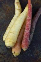 flerfärgade morötter foto
