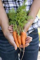 håller massa plockade morötter. foto