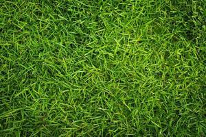 färskt gräs foto