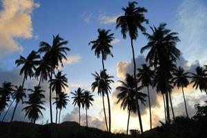 solnedgång, palmer. foto