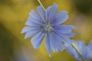 blomma. foto