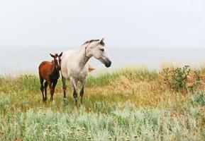 vit häst och rött föl foto