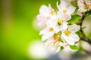 blommande foto