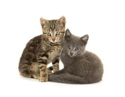 två söta kattungar på vitt foto