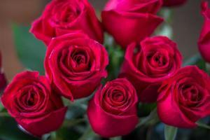 röda rosor foto