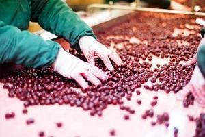 surkörsbär i bearbetningsmaskiner