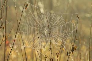 närbild av spindelnät i gryningen foto