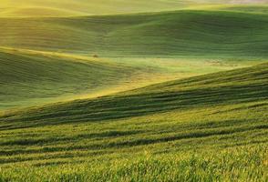grönt fält foto